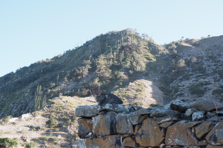 Du café sur cette montagne (Lombo Branco)