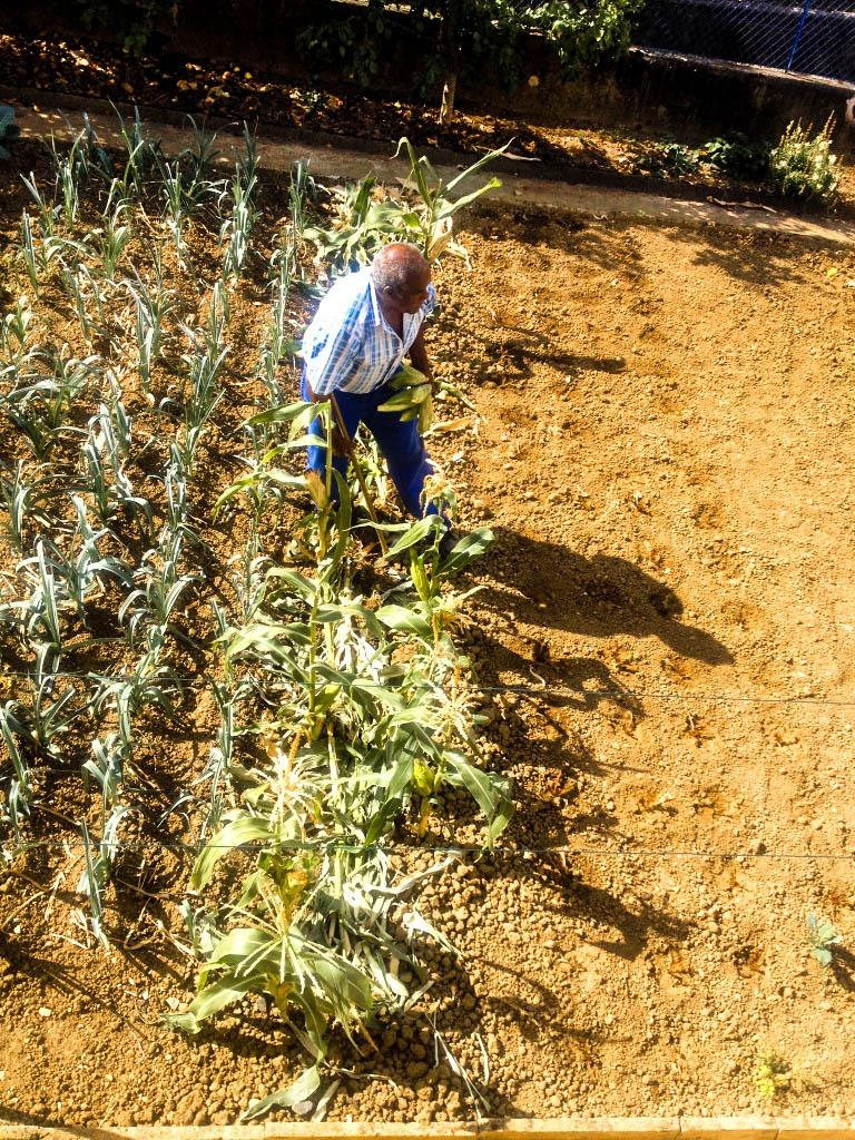 Le jardin de mon père. Il faut cultiver son jardin, c'est aussi une philosophie à Cabo Verde
